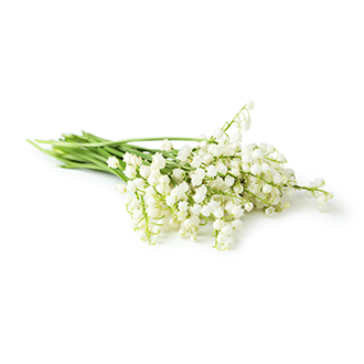 lily of the valley oil tile